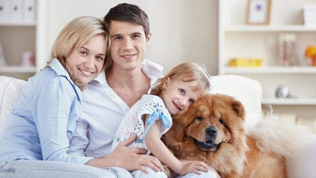 Wills & Trusts dog-young-family Direct Wills Sunderland